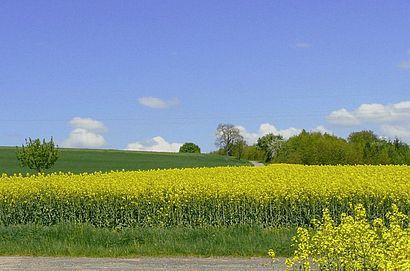 Renaturierung früherer Tongruben zu Biotopen und Feldern